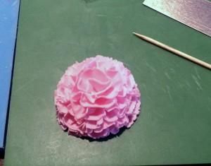 carnation14