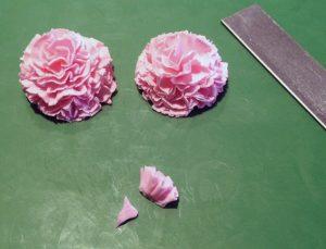 carnation15